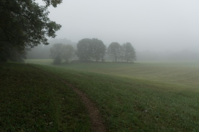 foggy_morning_susquehanna_state_park (4 of 6)