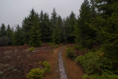 dolly_sods_wilderness (5 of 34)
