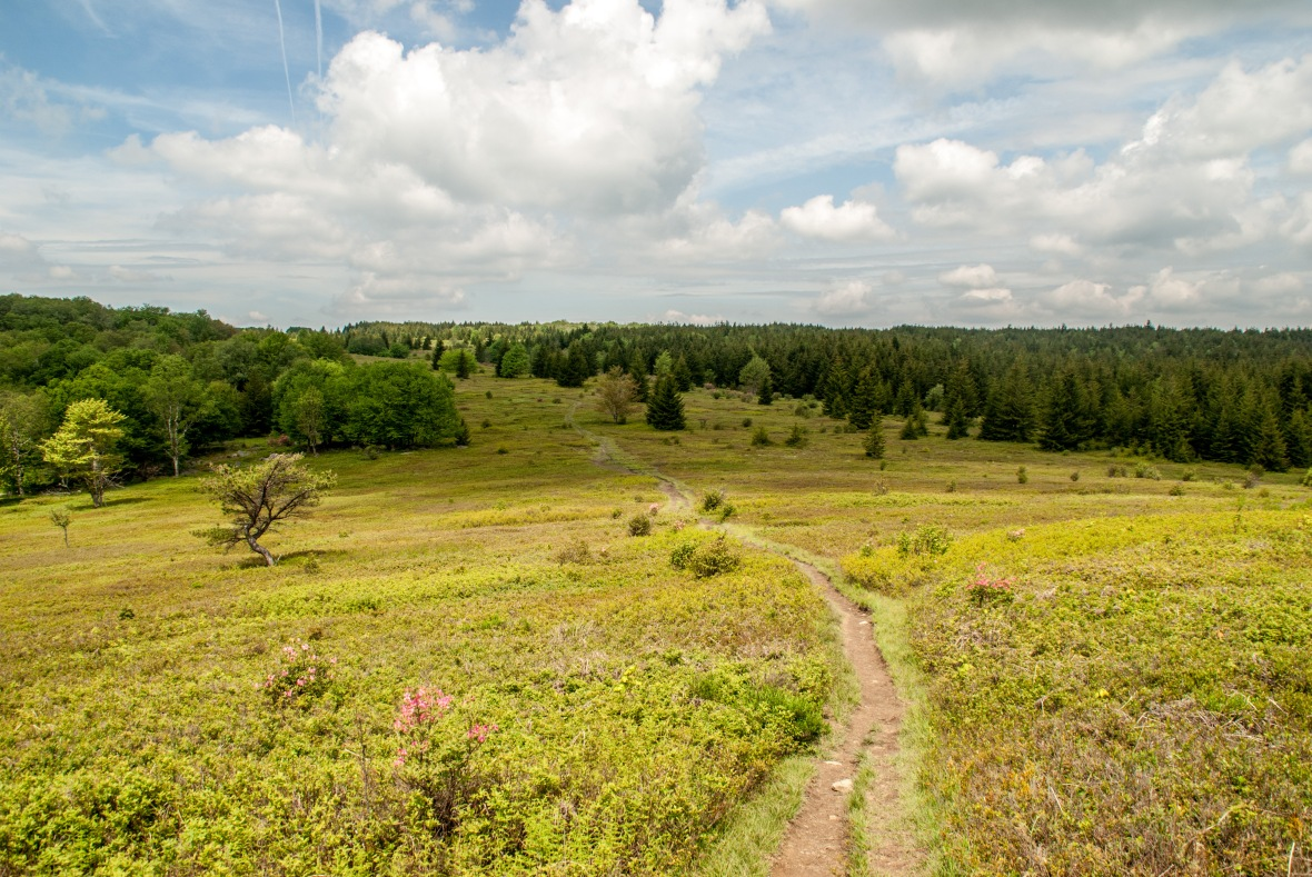 Dolly_Sods (1 of 4)